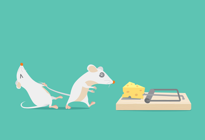 Mice grabbing for cheese